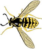 Bee. Illustration also available in vector format vector illustration