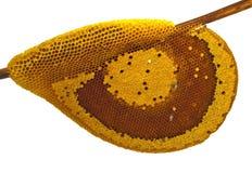 Free Bee Stock Photography - 14480772
