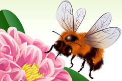 Bee. Is flying to a flower - vector illustration Royalty Free Stock Photography