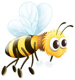 A bee Stock Images