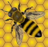 Bee. Raster version of vector seamless of bee (contain the Clipping Path of the object and details) There is in addition a vector format (EPS 8