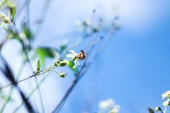 A bee above the flower petals forms a beauty royalty free stock photo