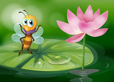 A bee above a waterlily Stock Photography