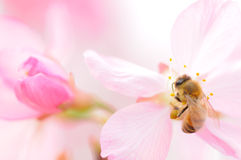 Free Bee And Flower Stock Photography - 69289322