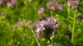 Bee Animal on Purple Flower