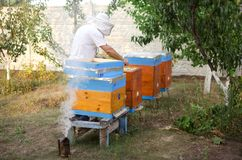 Bee apiary with bee colony in the garden. Beeking in summer. Bee. Keeper gets a honey Royalty Free Stock Image