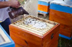 Bee apiary with bee colony in the garden. Beeking in summer. Bee. Keeper gets a honey Stock Photography