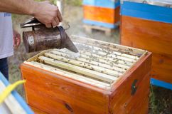 Bee apiary with bee colony in the garden. Beeking in summer. Bee. Keeper gets a honey Stock Photos