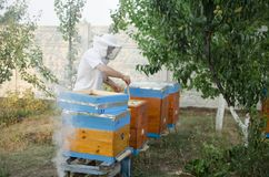 Bee apiary with bee colony in the garden. Beeking in summer. Bee. Keeper gets a honey Stock Images