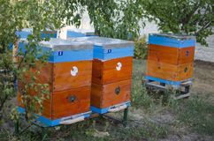 Bee apiary with bee colony in the garden. Beeking in summer. Bee. Keeper gets a honey Stock Image