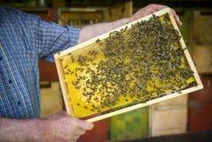 Bee apiary Stock Photo