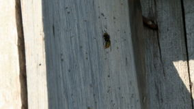 Bee on an apiary in summer day. Bee sitting on a wooden board on an apiary stock video