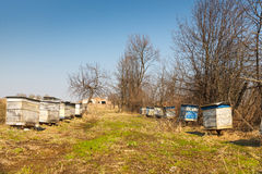 Bee apiary in the villag Royalty Free Stock Images