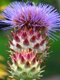 Bee on Artichoke. Flower Stock Photo