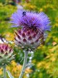 Bee on Artichoke Flower. Bee Sitting on Artichoke Royalty Free Stock Photos