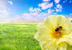 Free Bee At Work Stock Photo - 8942730
