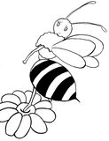 The bee b/w. The bee in the black and white Royalty Free Stock Image