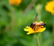 Bee on beautiful fresh flower in garden stock images