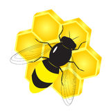 Bee. A beautiful bee and honeycombs with honey in the form of a flower Stock Image