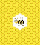 Bee in a bee hive Royalty Free Stock Photos