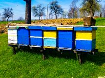 Wooden bee hives. Wooden colorful painted bee hives in green country field stock photo