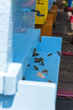Bee And Beehive. Bees swarming in front of the blue hive, closeup Royalty Free Stock Photo