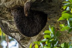 Bee Beehive Honeycomb stock photo