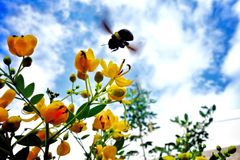 Bee. The bees busied themselves at making honey Royalty Free Stock Photos