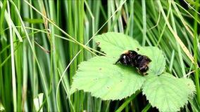 Bee behavior stock video footage