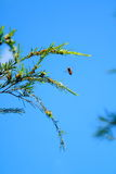 Bee in the Blue Sky Stock Photography