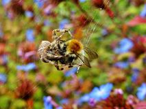 Bee, Blur, Close-up Royalty Free Stock Photo