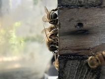 Bee Box and bees royalty free stock photography