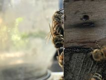 Bee Box and bees stock photography