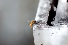 Bee on Box Royalty Free Stock Photos