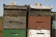 bee boxes Stock Images