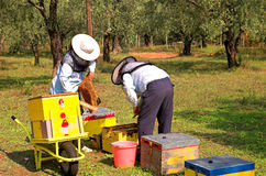Bee boxes and  bee keepers 2. Bee boxes and  bee keepers on work ... look the motion Royalty Free Stock Photo