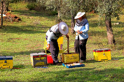 Bee boxes and  bee keepers 5. Bee boxes and  bee keepers on work ... look the motion Stock Photo