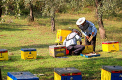 Bee boxes and  bee keepers 6. Bee boxes and  bee keepers on work ... look the motion Stock Photo