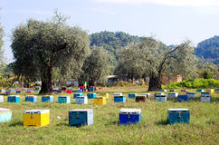 Bee boxes and olive trees. In vivid colours Royalty Free Stock Image