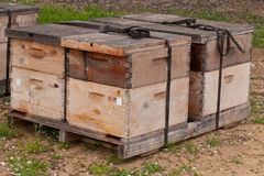 Bee boxes used to pollinate an almond orchard. Wooden bee boxes used to pollinate an almond orchard Stock Photos