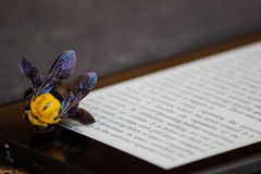 Bee on Brown and White Board Royalty Free Stock Images
