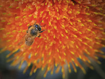 Bee 01 Stock Photo