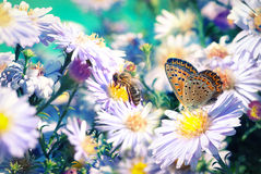 Bee and butterfly on flowers Stock Photography