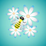 Bee On Camomiles Vector Illustration. Honey Bee and Camomiles on Blue Background, vector illustration vector illustration