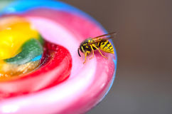 Bee on candy Stock Photo
