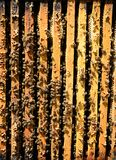 Bee colony Stock Photo
