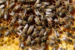 Bee colony Royalty Free Stock Photos
