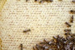 Bee colony on the honeycombs. Beekeeping and getting honey. Hive. On the background Royalty Free Stock Photography