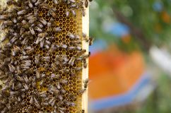 Bee colony on the honeycombs. Beekeeping and getting honey. Hive. On the background Stock Photos