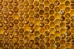 Bee combs Royalty Free Stock Photography